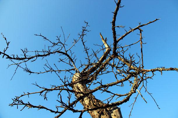 Сухое дерево.
