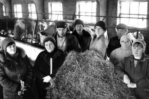 Животноводы ЗАО «Сангар»: — Коровушек никому не отдадим!