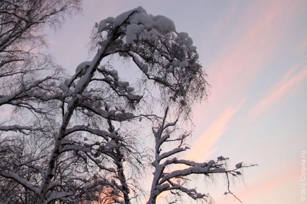 Снег на деревьях.